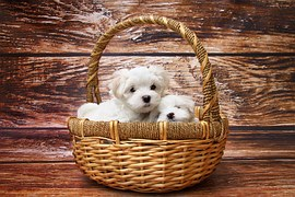 puppies inside basket